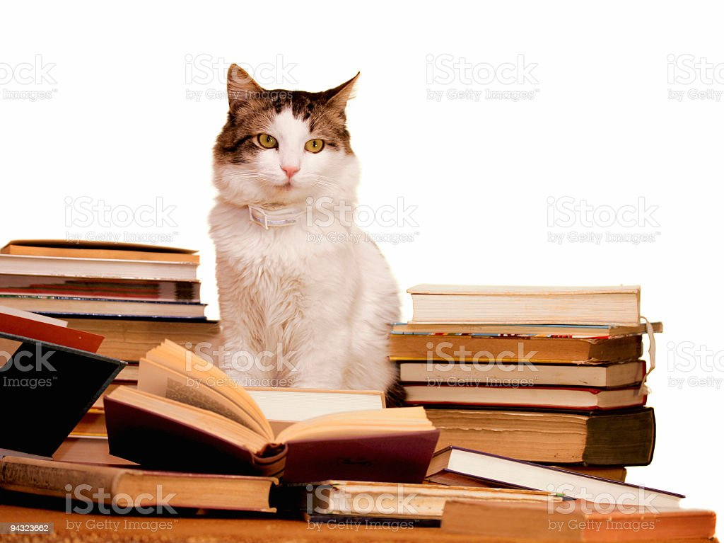 Smart cat learning a lot royalty-free stock photo