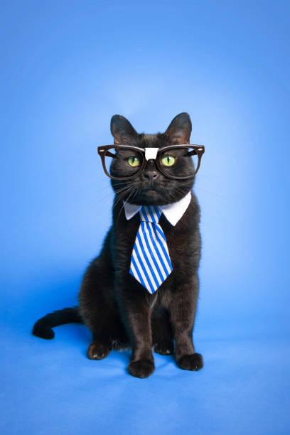Smart cat picture id1159409322?b=1&k=6&m=1159409322&s=612x612&w=0&h=x10son380odcxu95zgbik22ar9dsj2cyiq6uqkhhmdm=