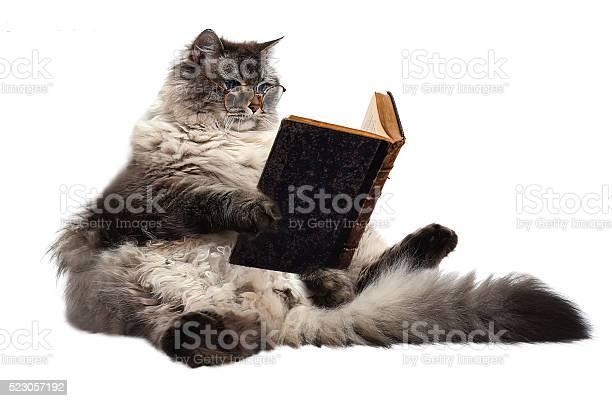 Smart cat picture id523057192?b=1&k=6&m=523057192&s=612x612&h=k xbvut3wrjzcfp06dezgvnff3n hkcmzbxz99vl 50=