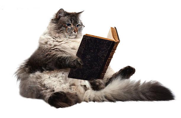 smart cat - humor bücher stock-fotos und bilder