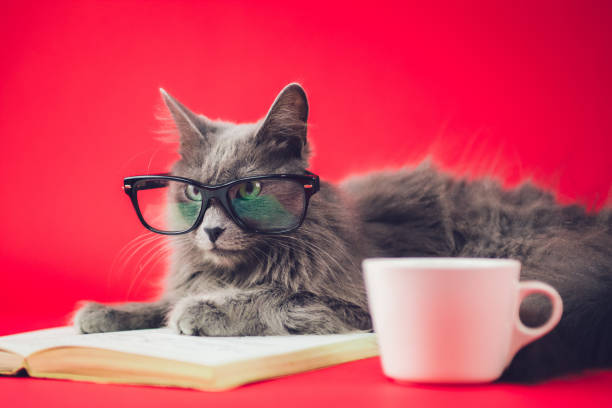 Smart cat picture id923505524?b=1&k=6&m=923505524&s=612x612&w=0&h=ljej5jt4 fjvuh91pozqwvp2ampjigwwxjfbv ujy w=