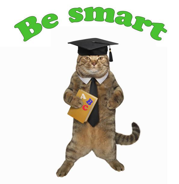 intelligente katze mit einem buch - intelligente zitate stock-fotos und bilder