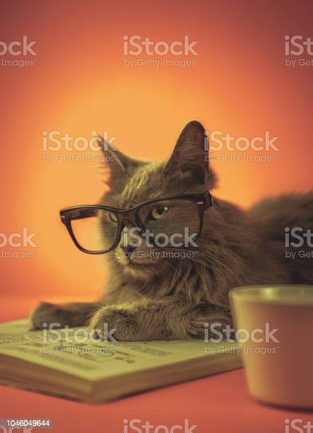 Smart cat with glasses and book picture id1046049644?b=1&k=6&m=1046049644&s=612x612&h=j6fzejsoyizduk xnqiwqrm 2qikjavx9vnmr ctlgy=