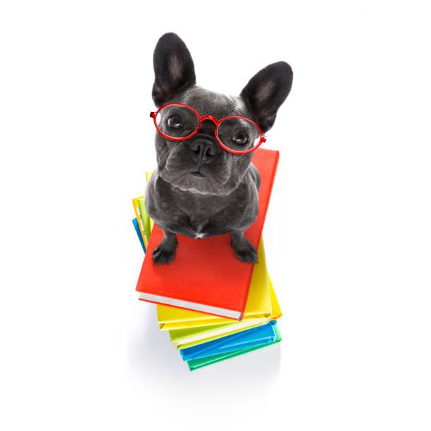 Smart Hund und Bücher – Foto