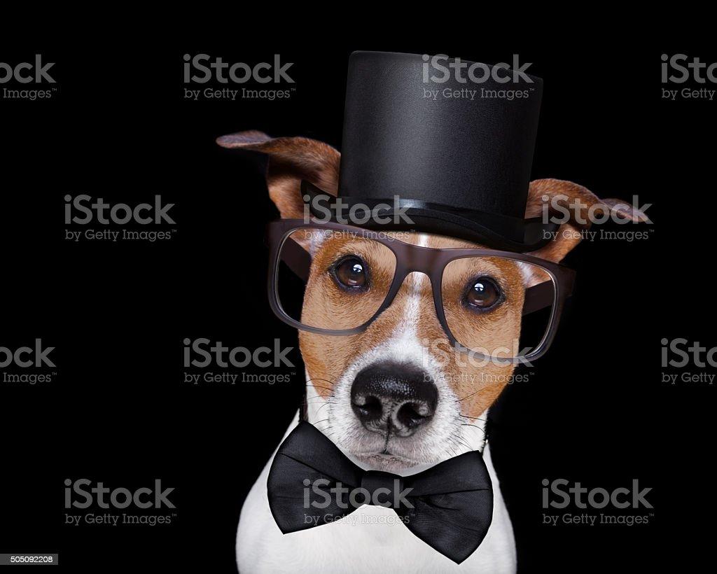 smart dog isolated on black stock photo