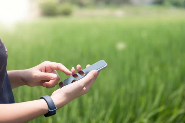 Intelligente Landwirtschaftstechnik und ökologische Landwirtschaft Frau mit Smartphone im Reisfeld-Blank Screen Handy für grafische Displaymontage – Foto