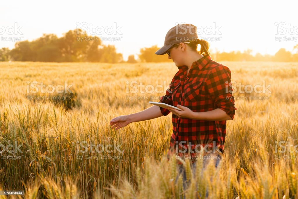 Smart Farming And Digital Agriculture Stock Photo - Download