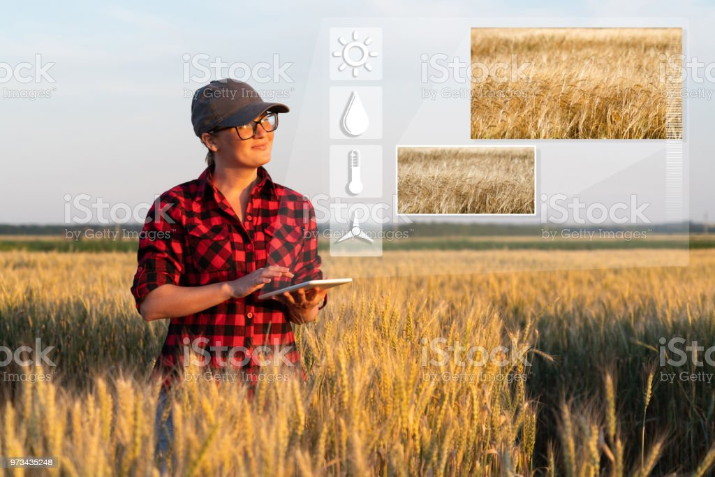 Smart Farming And Digital Agriculture Stock Photo - Download Image