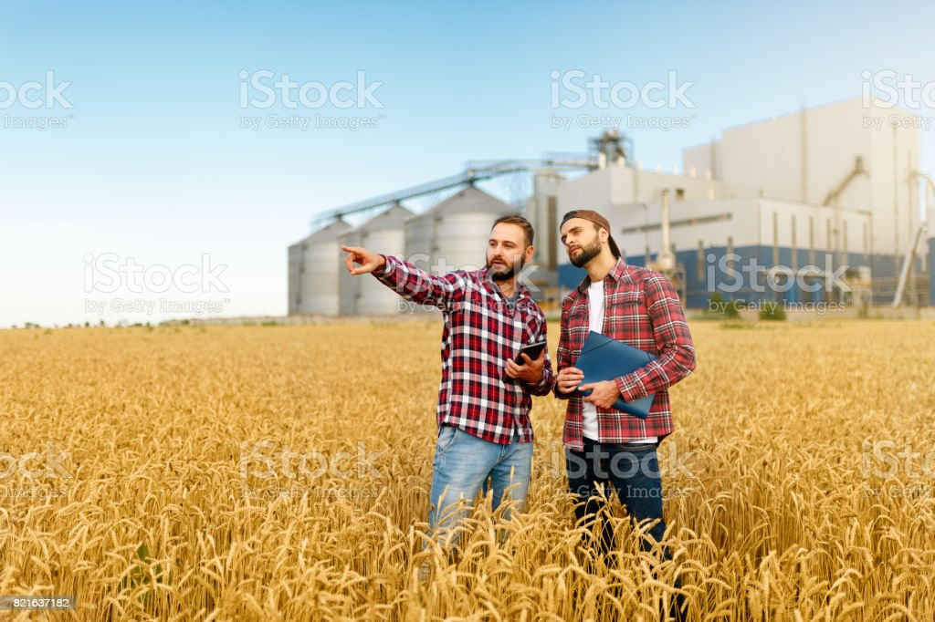 Smart farming using modern technologies in agriculture. Man agronomist farmer with digital tablet computer in wheat field using apps and internet, selective focus stock photo