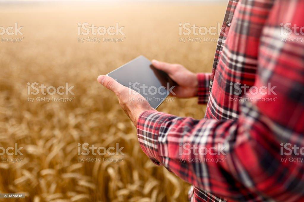 Agricultura inteligente utilizando las modernas tecnologías en la agricultura. Granjero de ingeniero agrónomo de hombre con tableta digital en el campo de trigo con aplicaciones e internet, enfoque selectivo - foto de stock