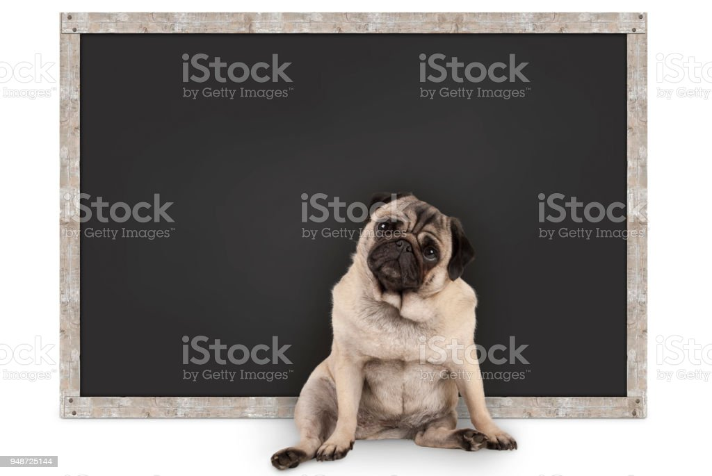 slimme grappig pug puppy hondje zit leeg schoolbord foto