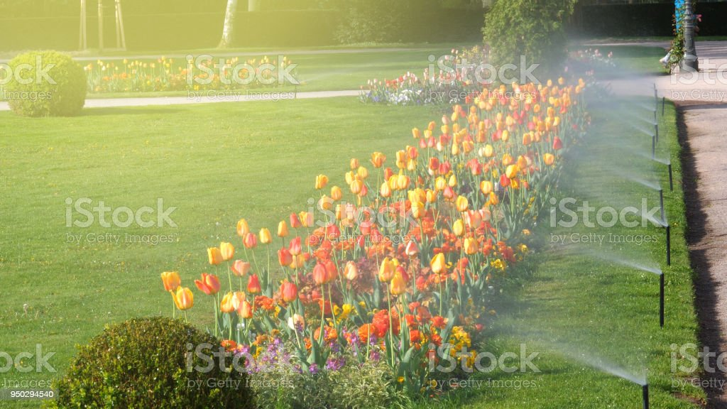 Smart garden luxury park with automatic sprinkler irrigation system stock photo