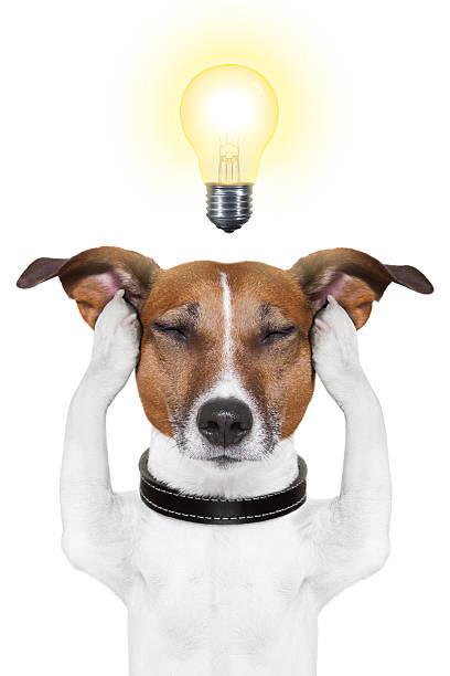 Smart intelligent dog picture id160470265?b=1&k=6&m=160470265&s=612x612&w=0&h=oa no301qdntlwkx i5nbymacbpe0jbqqasgdzwakva=