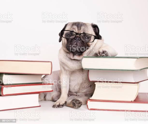 Smart intelligent pug puppy dog with reading glasses sitting down picture id991047198?b=1&k=6&m=991047198&s=612x612&h=ullj5csnsr7fts3ry4pmengymrufmfizip iow1mgjm=