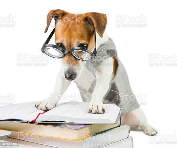 Smart jack russell terrier picture id469090060?b=1&k=6&m=469090060&s=612x612&h=ypn5mn0say1fnu4vgstrf2rbletjzefn02z42qlrdxu=