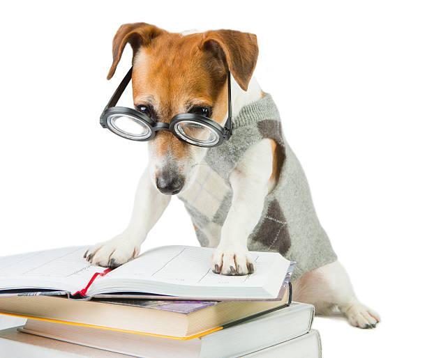 smart jack russell terrier - humor bücher stock-fotos und bilder