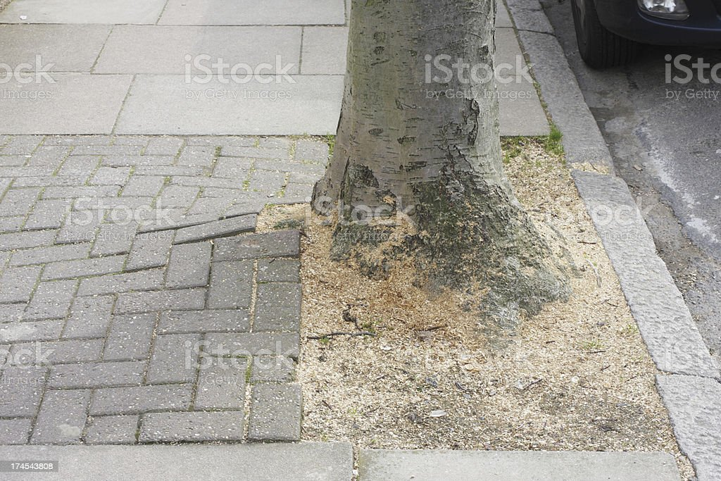 Broken pavement bricks lifted by tree roots next to kerb stock photo