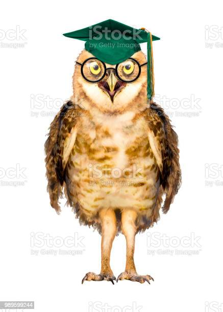 Smart owl wearing glasses and graduation cap picture id989599244?b=1&k=6&m=989599244&s=612x612&h=lsswq9oqxg mvncdlrkk4ftnmoslzubpc0re2vu kiq=