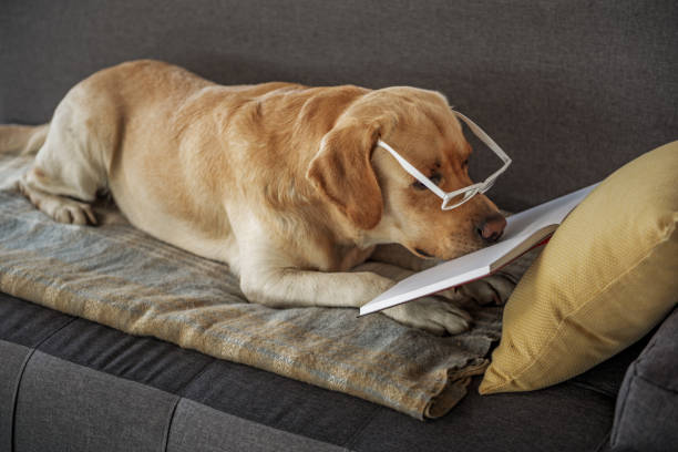 intelligente haustier lesebuch auf couch - humor bücher stock-fotos und bilder