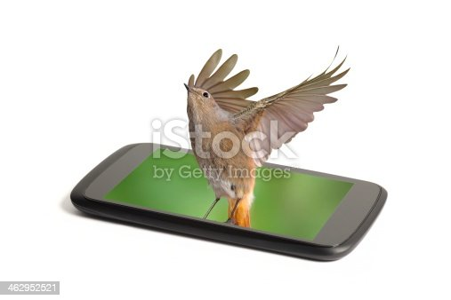 istock Smart phone screen alive real color 462952521