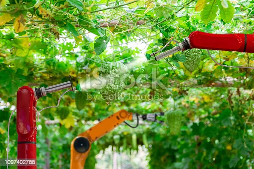 istock Smart robotic farmers harvest in agriculture futuristic robot automation to work technology increase efficiency 1097402788