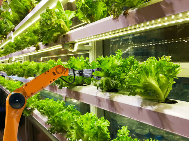 Smart robotic farmers in agriculture futuristic robot automation to vegetable farm stock photo