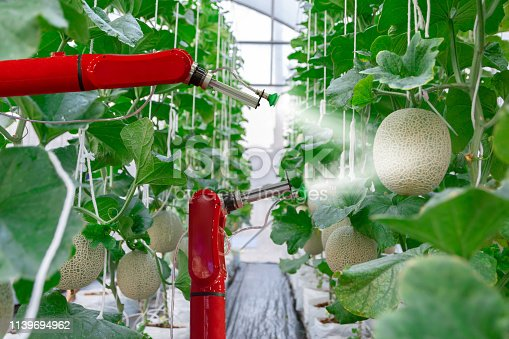 1127437312istockphoto smart robotic farmers melon in agriculture futuristic robot automation  work to spray chemical or increase efficiency 1139694962