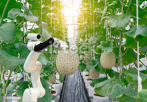 1127437312istockphoto smart robotic farmers melon in agriculture futuristic robot automation  work to spray chemical or increase efficiency 1139695036