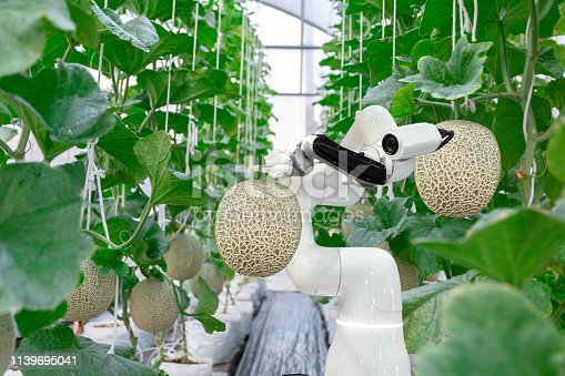 1127437312istockphoto smart robotic farmers melon in agriculture futuristic robot automation  work to spray chemical or increase efficiency 1139695041
