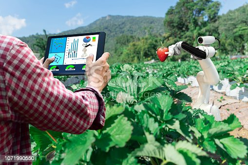 istock Smart robotic farmers strawberry in agriculture futuristic robot automation to work or increase efficiency 1071990550