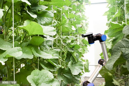 1022530858 istock photo smart robotic in agriculture concept, robot farmers (automation) must be programmed to work in the vertical or indoor farm for increase efficiency, growing a seed, harvesting, monitoring insect or bug 856517658