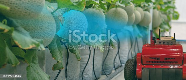 1022530858istockphoto smart robotic in agriculture futuristic concept, robot farmers (automation) must be programmed to work to spray chemical,fertilizer or increase efficiency, growing a seed, harvesting, reduce time 1022530846