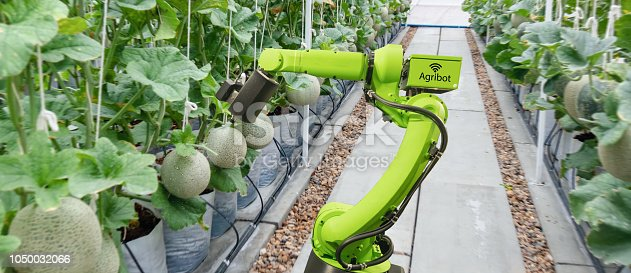 istock smart robotic in agriculture futuristic concept, robot farmers (automation) must be programmed to work to spray chemical,fertilizer or increase efficiency, growing a seed, harvesting, reduce time 1050032066