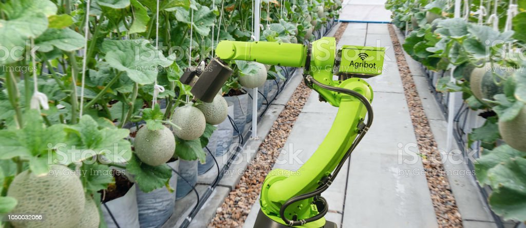 smart robotic in agriculture futuristic concept, robot farmers (automation) must be programmed to work to spray chemical,fertilizer or increase efficiency, growing a seed, harvesting, reduce time stock photo