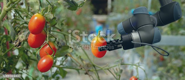 1022530858istockphoto smart robotic in agriculture futuristic concept, robot farmers (automation) must be programmed to work in the vertical or indoor farm for increase efficiency, growing a seed, harvesting, reduce time 1066949402