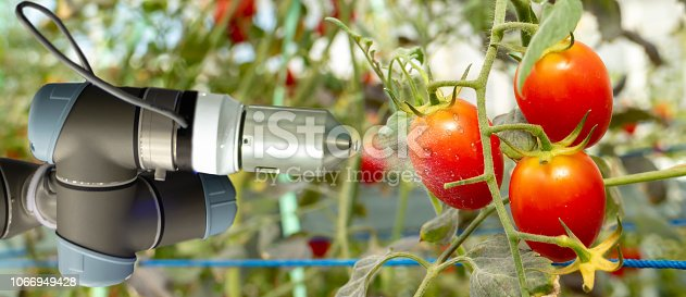 1022530858istockphoto smart robotic in agriculture futuristic concept, robot farmers (automation) must be programmed to work in the vertical or indoor farm for increase efficiency, growing a seed, harvesting, reduce time 1066949428
