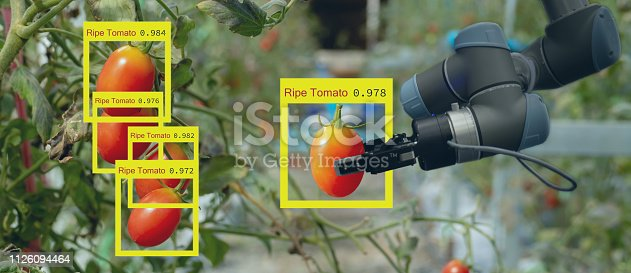 istock smart robotic in agriculture futuristic concept, robot farmers (automation) must be programmed to work to collect vegetable and fruit by using deep learning and object recognition technology 1126094464
