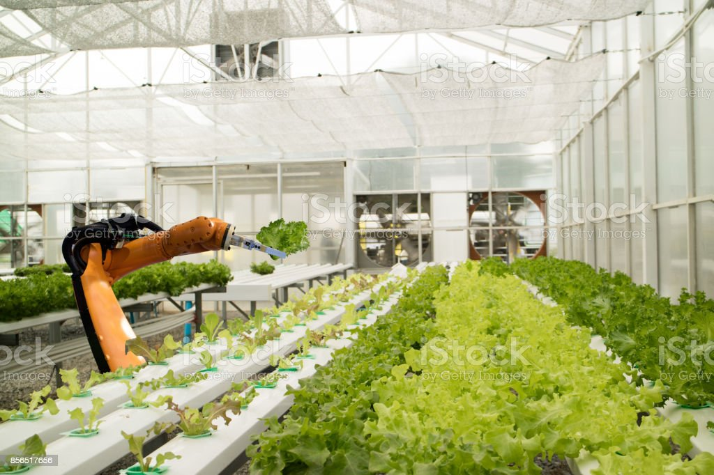 smart robotic in agriculture futuristic concept, robot farmers (automation) must be programmed to work in the vertical or indoor farm for increase efficiency, growing a seed, harvesting, reduce time stock photo