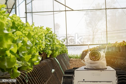 1022530858istockphoto smart robotic in agriculture futuristic concept, robot farmers (automation) must be programmed to work in the vertical or indoor farm for increase efficiency, growing a seed, harvesting, reduce time 905416728