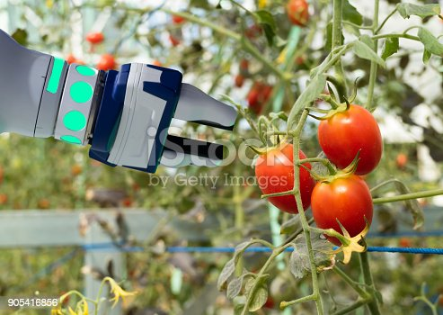 1022530858istockphoto smart robotic in agriculture futuristic concept, robot farmers (automation) must be programmed to work in the vertical or indoor farm for increase efficiency, growing a seed, harvesting, reduce time 905416856
