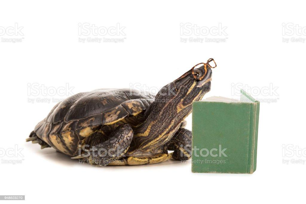 Intelligente Schildkröte Lesebuch – Foto