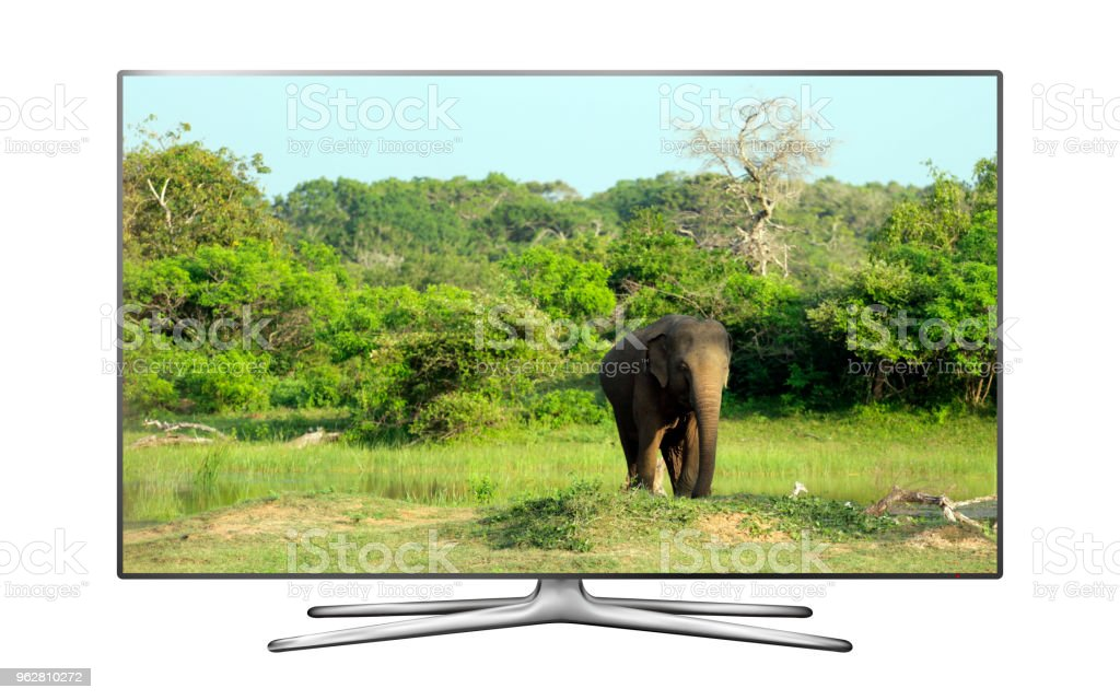 TV inteligente com elefante selvagem na tela - Foto de stock de Animal royalty-free