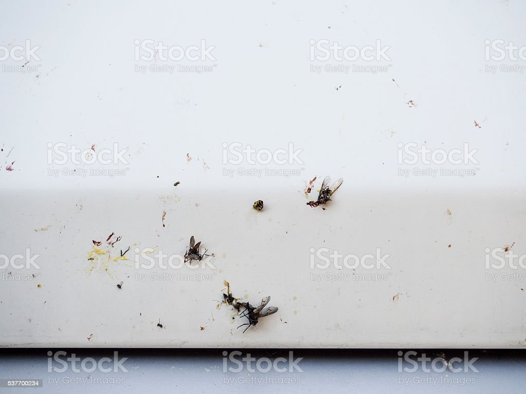 Smashed insects on a white car front stock photo