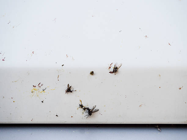 Smashed insects on a white car front - foto de acervo