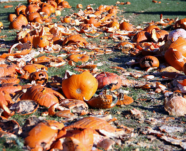 Smashed Pumpkins A bunch of smashed pumpkins are seen together. demolishing stock pictures, royalty-free photos & images