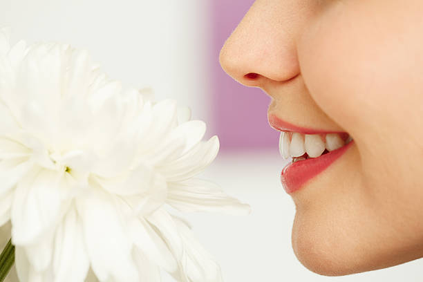 Smelling flower Young woman enjoying tender fragrance of white chrysanthemum human nose stock pictures, royalty-free photos & images