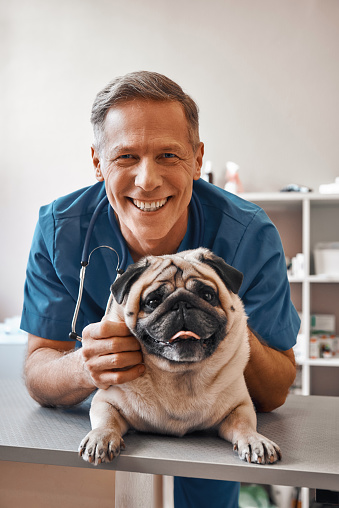 istock Smile! Cheerful middle aged vet holding a pug and smiling at camera while standing at veterinary clinic 1142169687