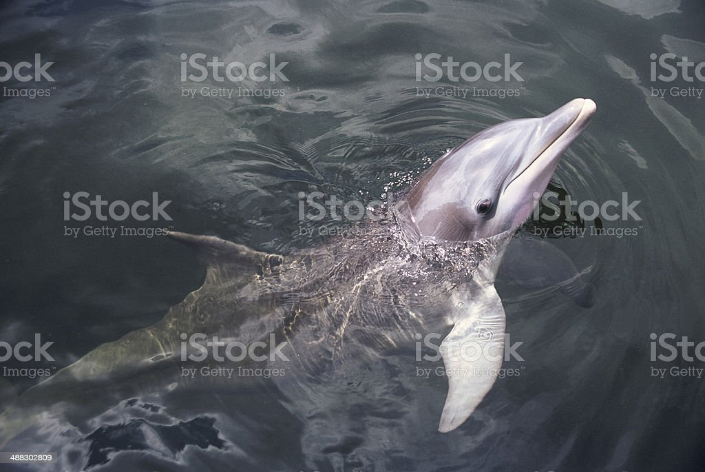 Smile dolphin stock photo