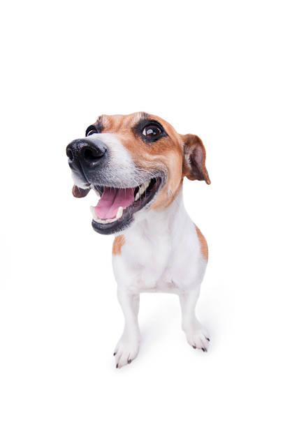 Smile emotional animal picture id178121148?b=1&k=6&m=178121148&s=612x612&w=0&h=fscmvas eb5ecmnnstdkrtoe6ghbay7y 64sv6p0mno=