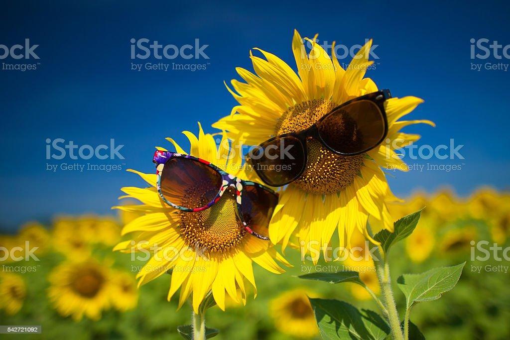Smile Sunflowers stock photo
